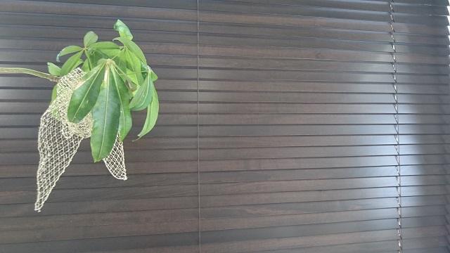 17-05-24木製ブラインド (2).JPG